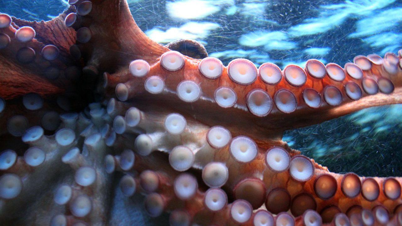 octopus-250101_1920