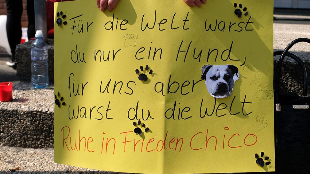 Mahnwache für Kampfhundmischling Chico